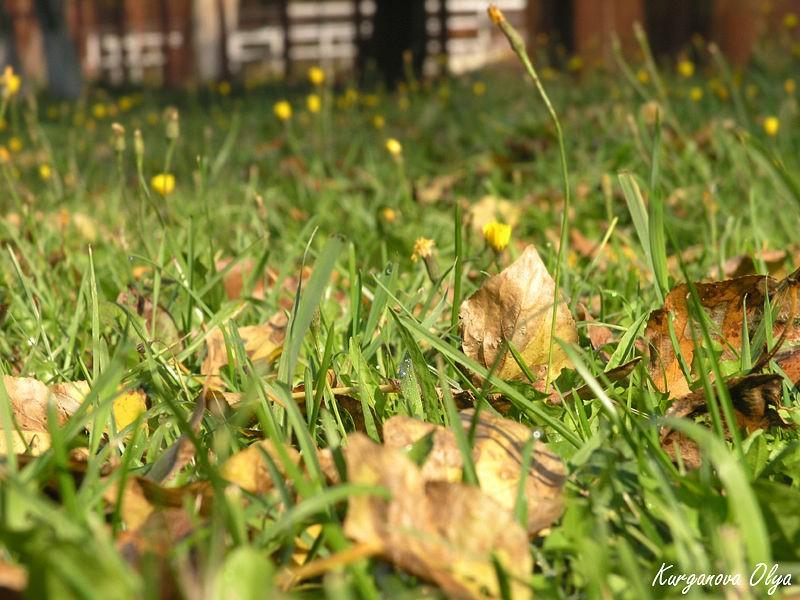 Осень — как сохранить насыщенный цвет газона?
