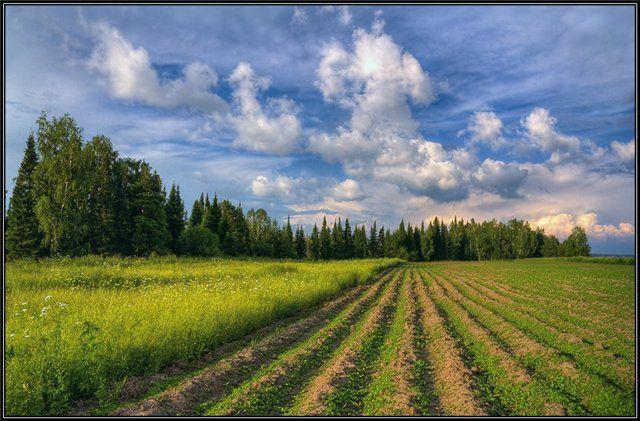 Быстрое восстановление рекультивируемых земель