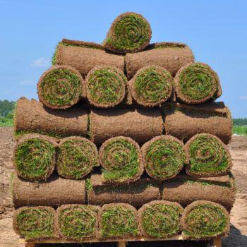 купить рулонный газон ЭЛИТНЫЙ