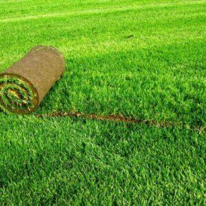 купить стандартный рулонный газон